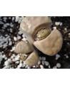 C169 L, karasmontana subsp, karasmontana var, karasmontana [*mickbergensis]